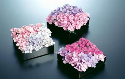 只要具备观赏价值,能水养持久或本身较干燥,不需水养也能观赏较长时间的花,都可以剪切下来用于插花。当然,插花的材料不止限于活的植物材料,有时某些枯枝及干的花序,果序等也具有美丽的形态和色泽,同样可以插花。花卉市场上还有许多人工加工的干花,也是很好的插花材料,他们虽然没有鲜花那样水灵和富有生机,但却具有独特的自然色泽,或者加工成独特的色彩。另外,还有各种质地的人造花,如绢花、塑料花、纸花、金属花等等,用它们做成的插花作品摆放在居室,既能起到花卉的装饰作用,又比较经济实惠,且易于管理。 花材选购要诀