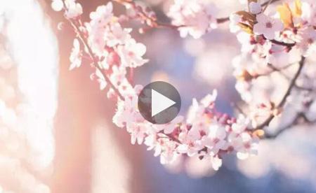 春夏之交,在音乐里听花开的声音