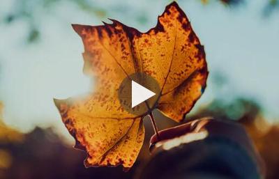 初秋的叶子,一定要这样拍!